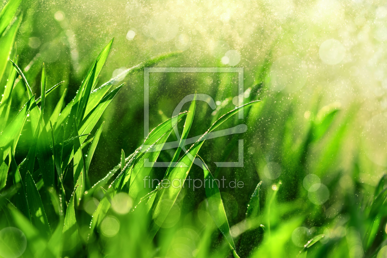 Bild-Nr.: 12171698 Grass macro with water in the air erstellt von Smileus