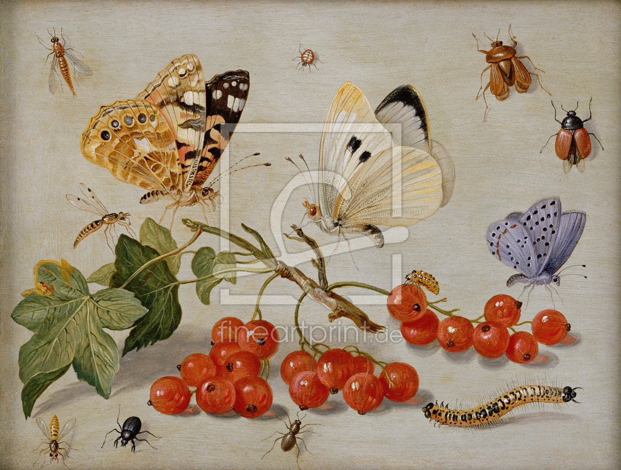 Bild-Nr.: 31002264 A still life with sprig of Redcurrants, butterflies, beetles, caterpillar and in erstellt von Kessel, Jan van, the Elder