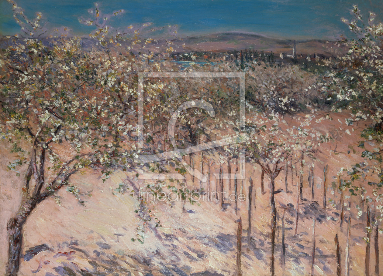 Bild-Nr.: 31002653 Orchard with Flowering Apple Trees, Colombes erstellt von Caillebotte, Gustave